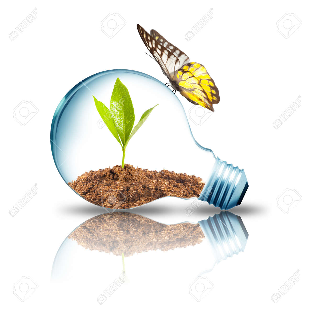 Light bulb with plant inside with butterfly Stock Photo - 14907939