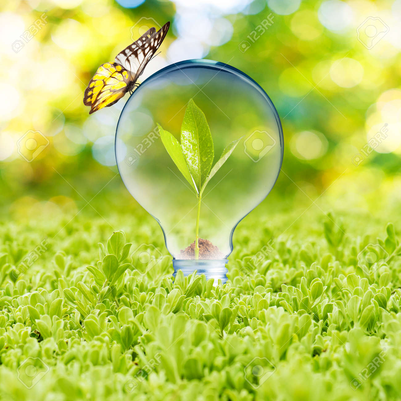 Light bulb on green grass and butterfly  Concept of Eco technology Stock Photo - 22662439
