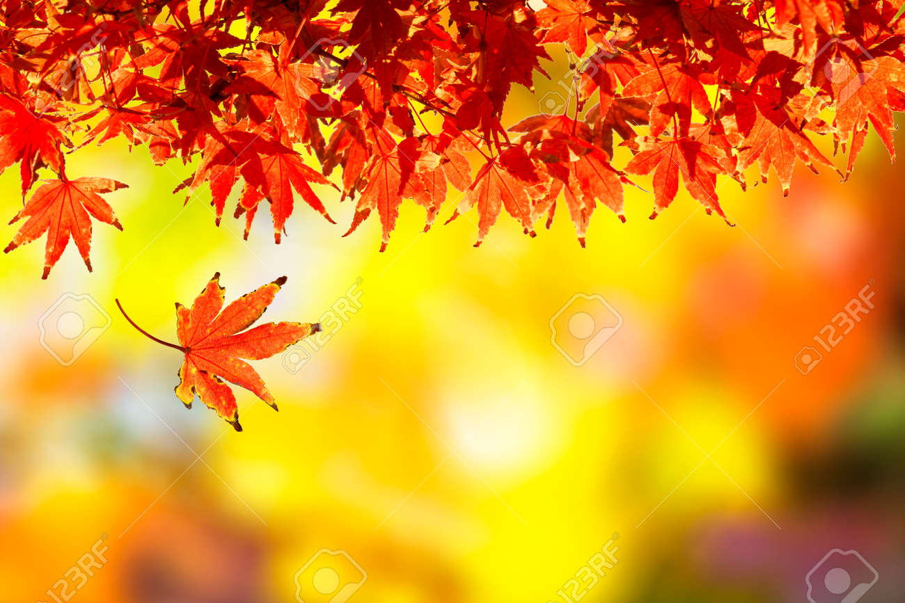autumn leaf falling autumn season stock photo picture and royalty