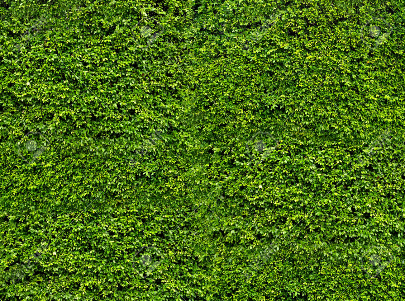 Natural fresh green leaf wall, eco friendly background and texture - 70438767
