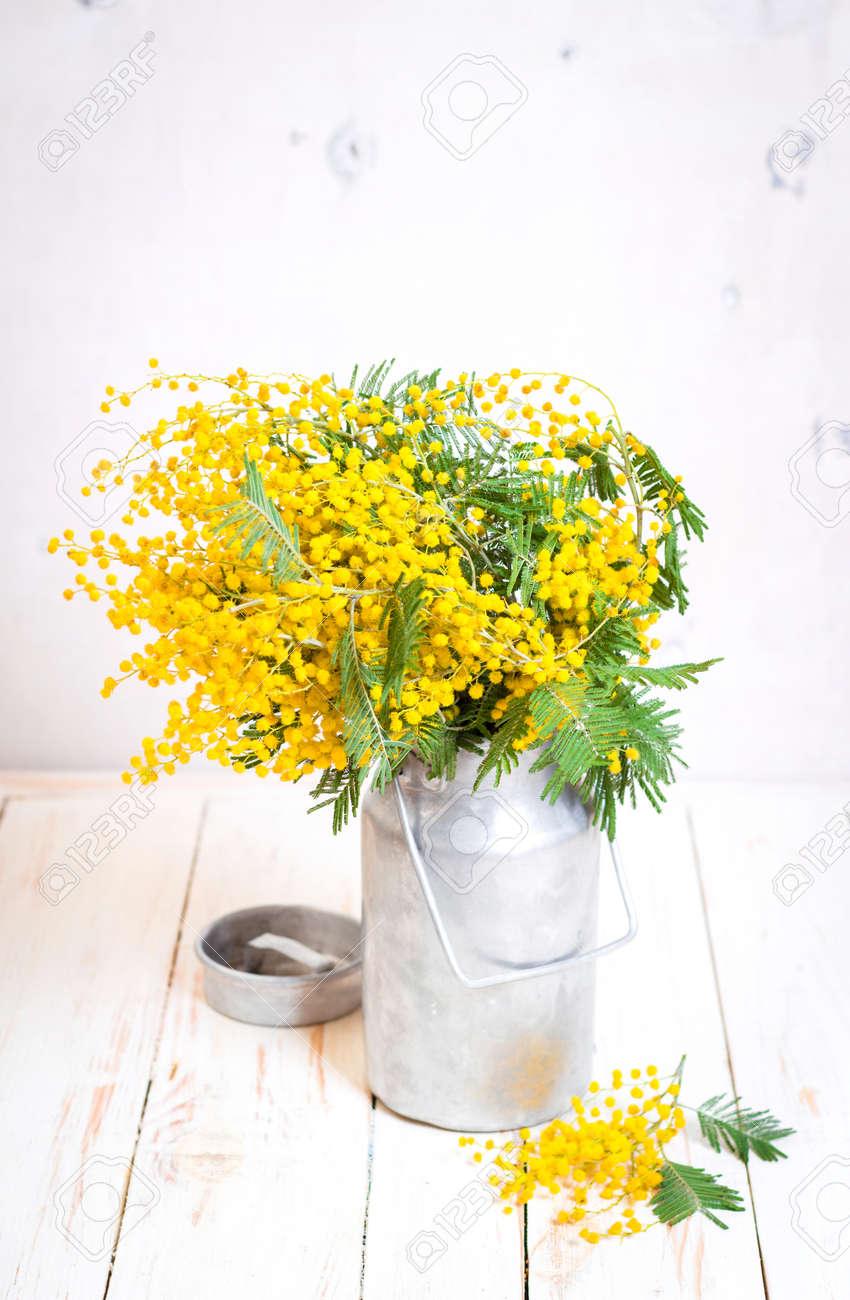 Fleurs Mimosa Dans Un Lait Cru De Metal Peut Sur Le Fond En Bois