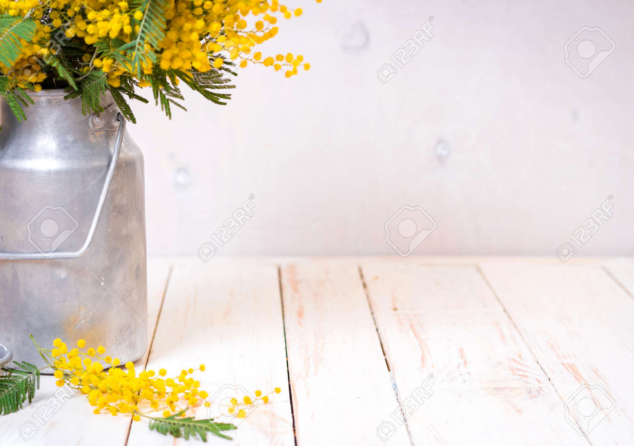 Legno Bianco Vintage : Immagini stock mimosa fiori in un latte di metallo vintage