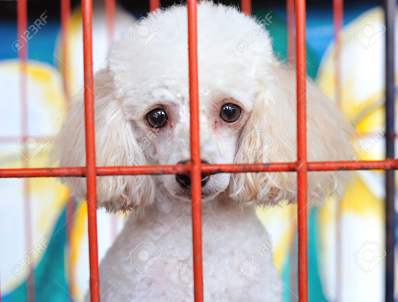 lonely dog in cage Stock Photo - 11108746