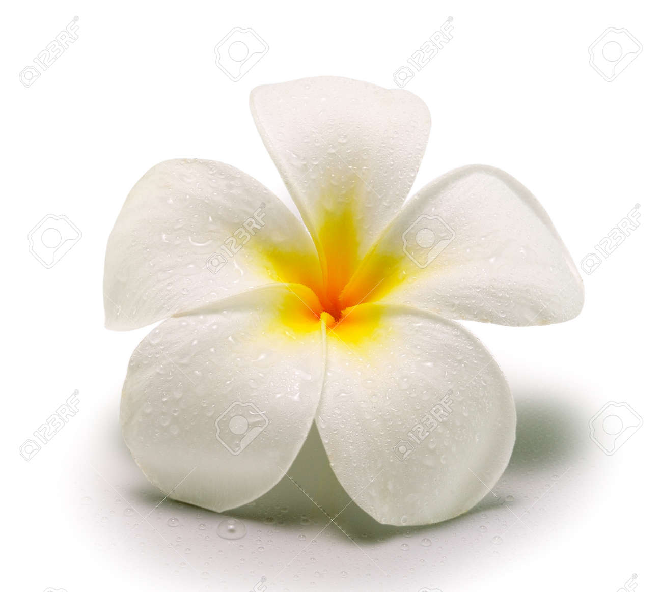 White Tropical Flowers Dress Images