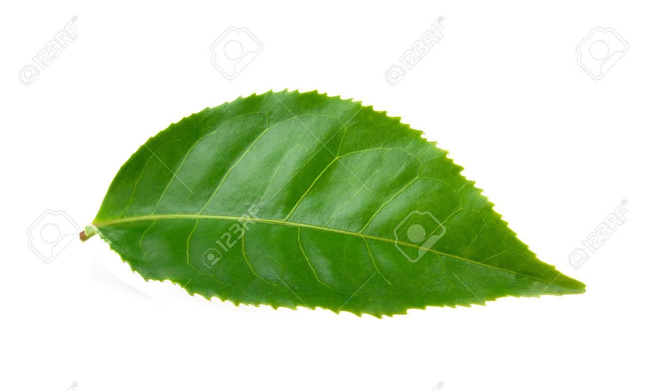 tea leaf - 53429352
