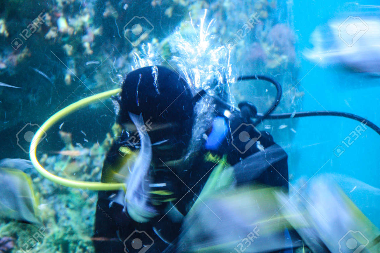 Colorful aquarium, showing different colorful fishes swimming Stock Photo - 21327126