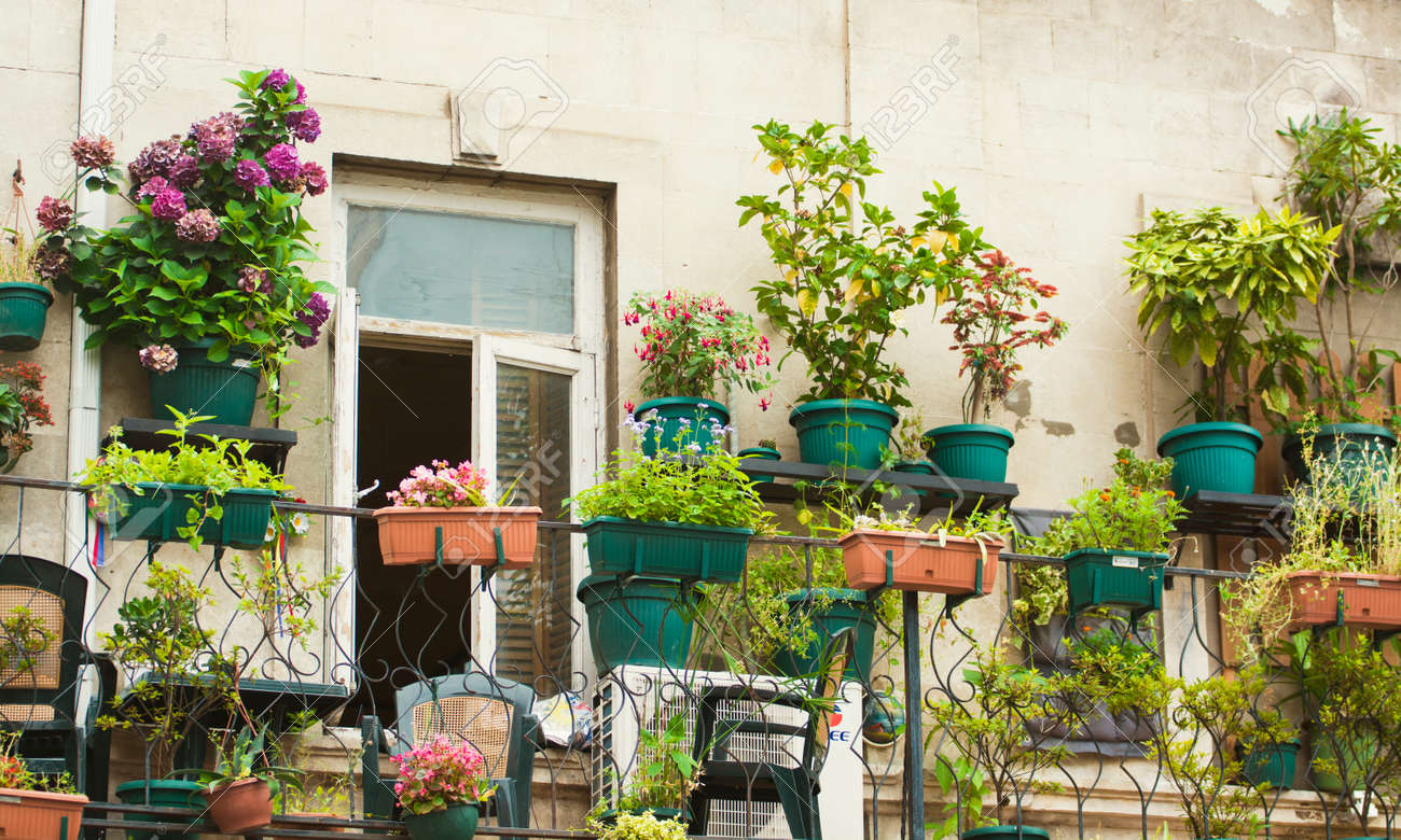 Petite plante herbacée et jardin fleuri construit sur une terrasse