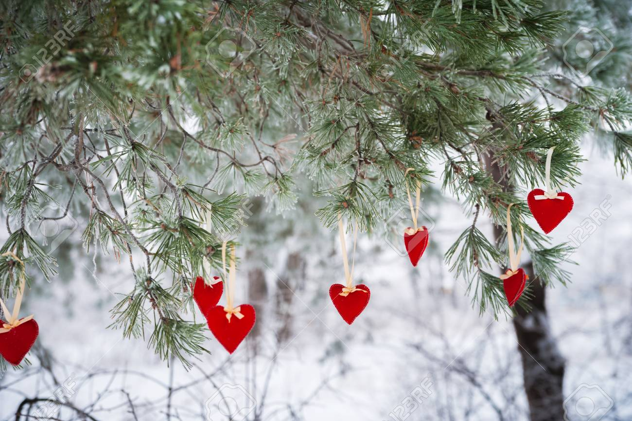 Hearts Of Christmas.On The Snow Covered Branch Of Christmas Trees Christmas Decorations