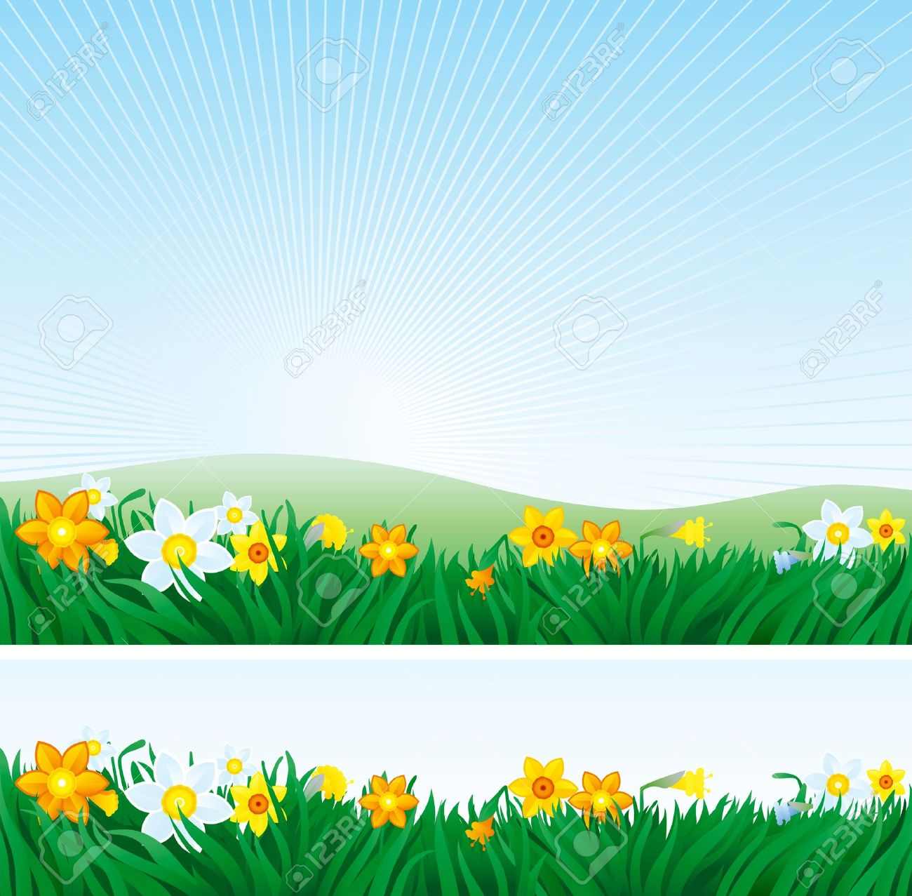 Easter Background And Banner Of Spring Landscape With Yellow White Daffodils Stock Vector
