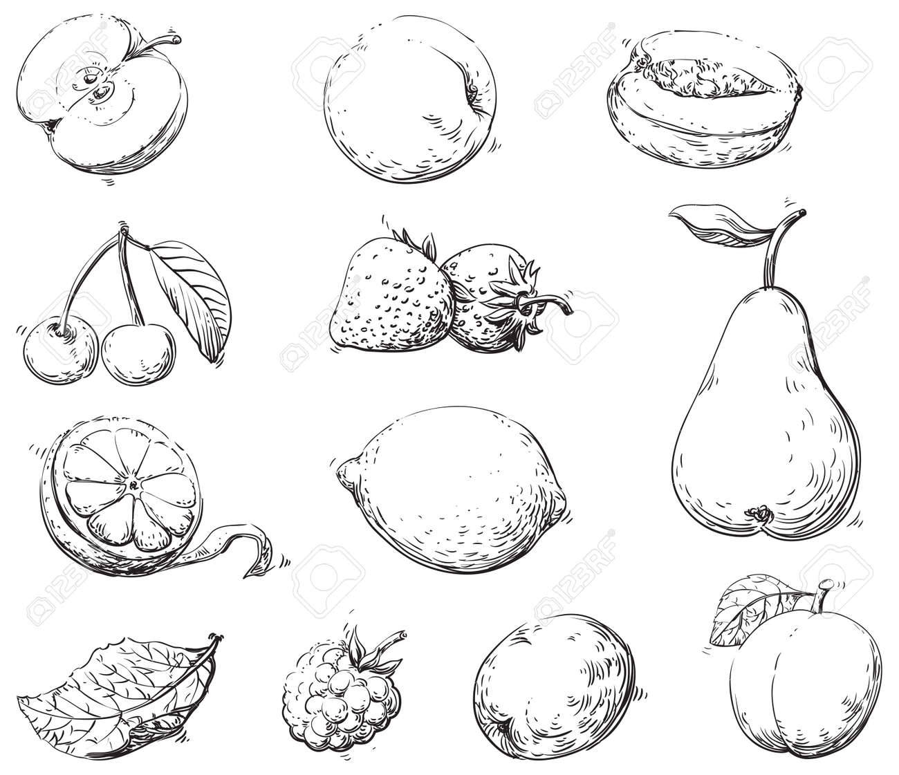fruits vector set of fruits at engraving style royalty free