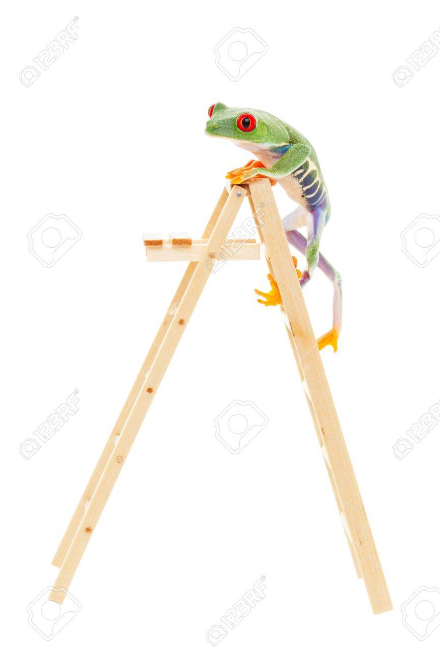 A red-eyed tree frog climbing to the top of the ladder.  Conceptual image to illustrate success, promotion, advancement.  Also pet shop or zoo under construction or expansion.  Shot on white background. Stock Photo - 11904200