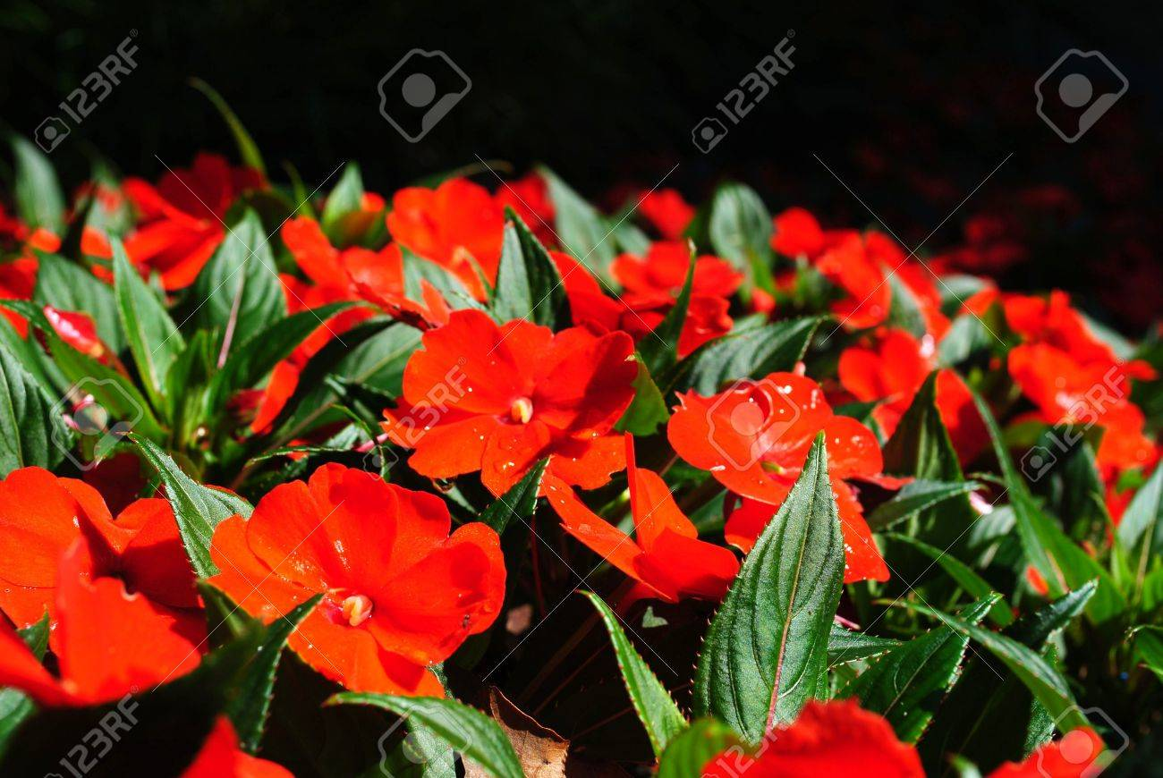 a rare species of red flower called flower glass - 21951497