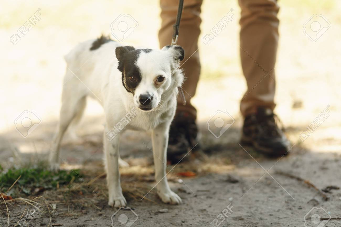 cute little scared dog from shelter posing outside in sunny park,