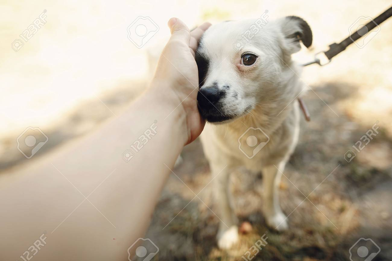 hand of man caress little scared dog from shelter posing outside