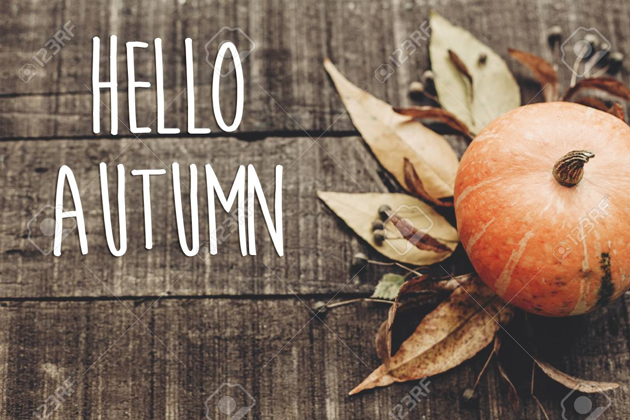 Hello Autumn Text Greeting Card Fall Image Beautiful Pumpkin Stock Photo Picture And Royalty Free Image Image 86264513