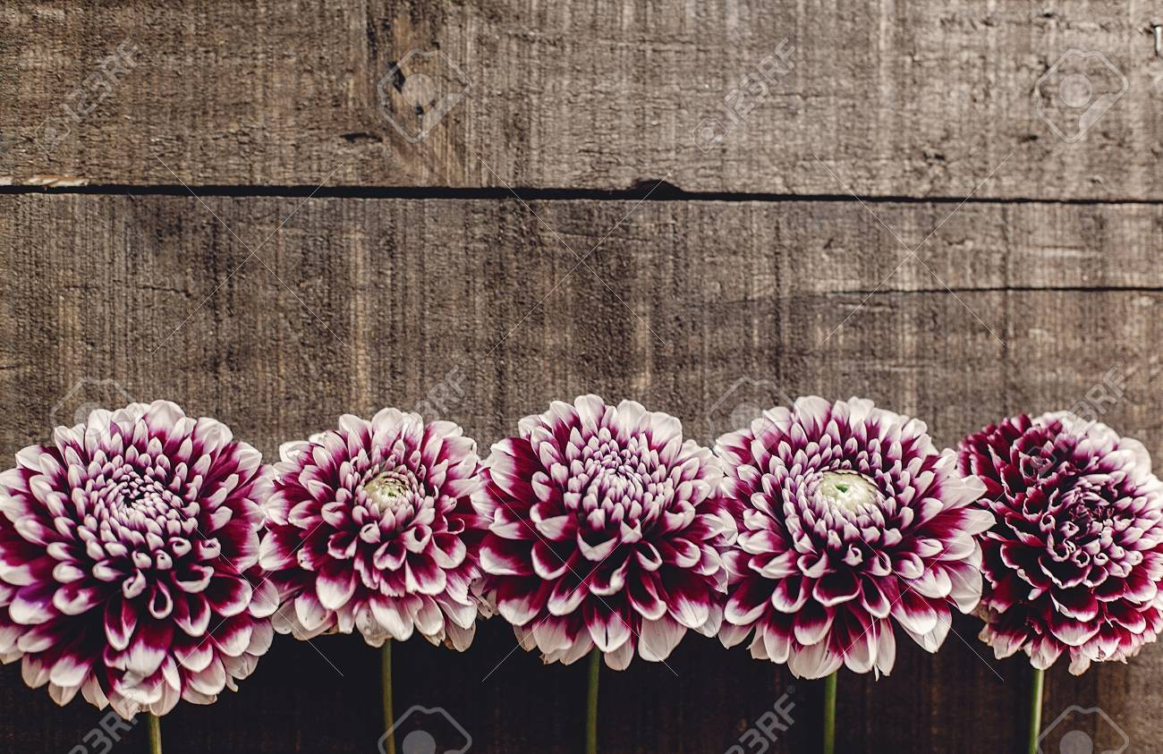 Beautiful Dahlias On Rustic Wooden Background Flat Lay Purple