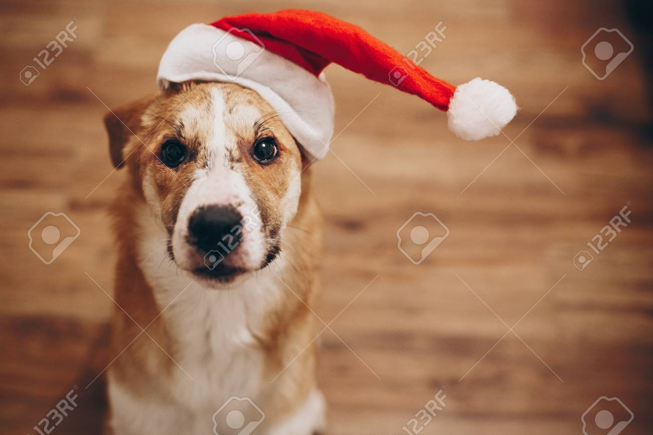 Funny Dog In Santa Hat Merry Christmas And Happy New Year Concept