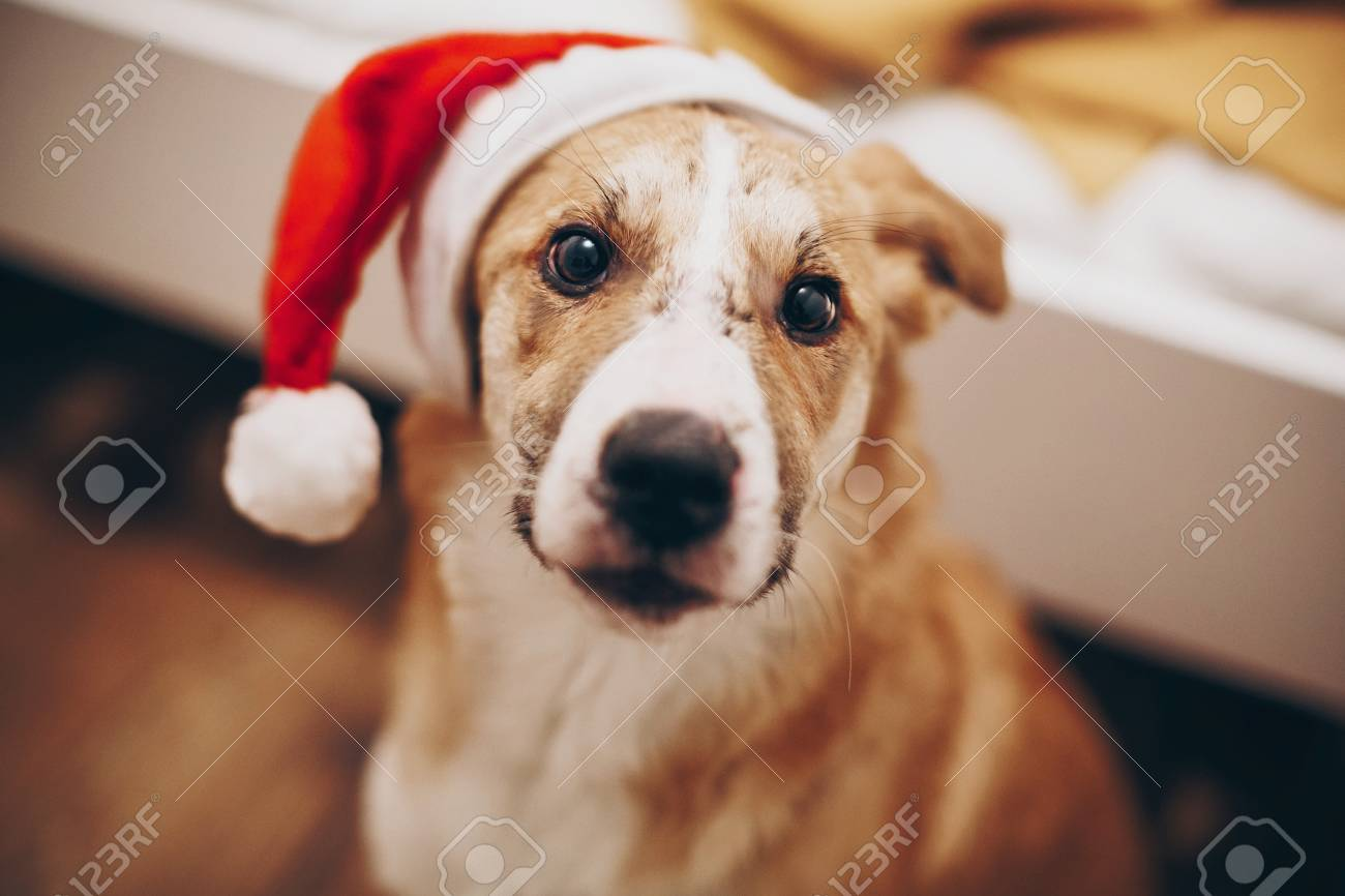 merry christmas and happy new year concept cute dog in santa hat space for