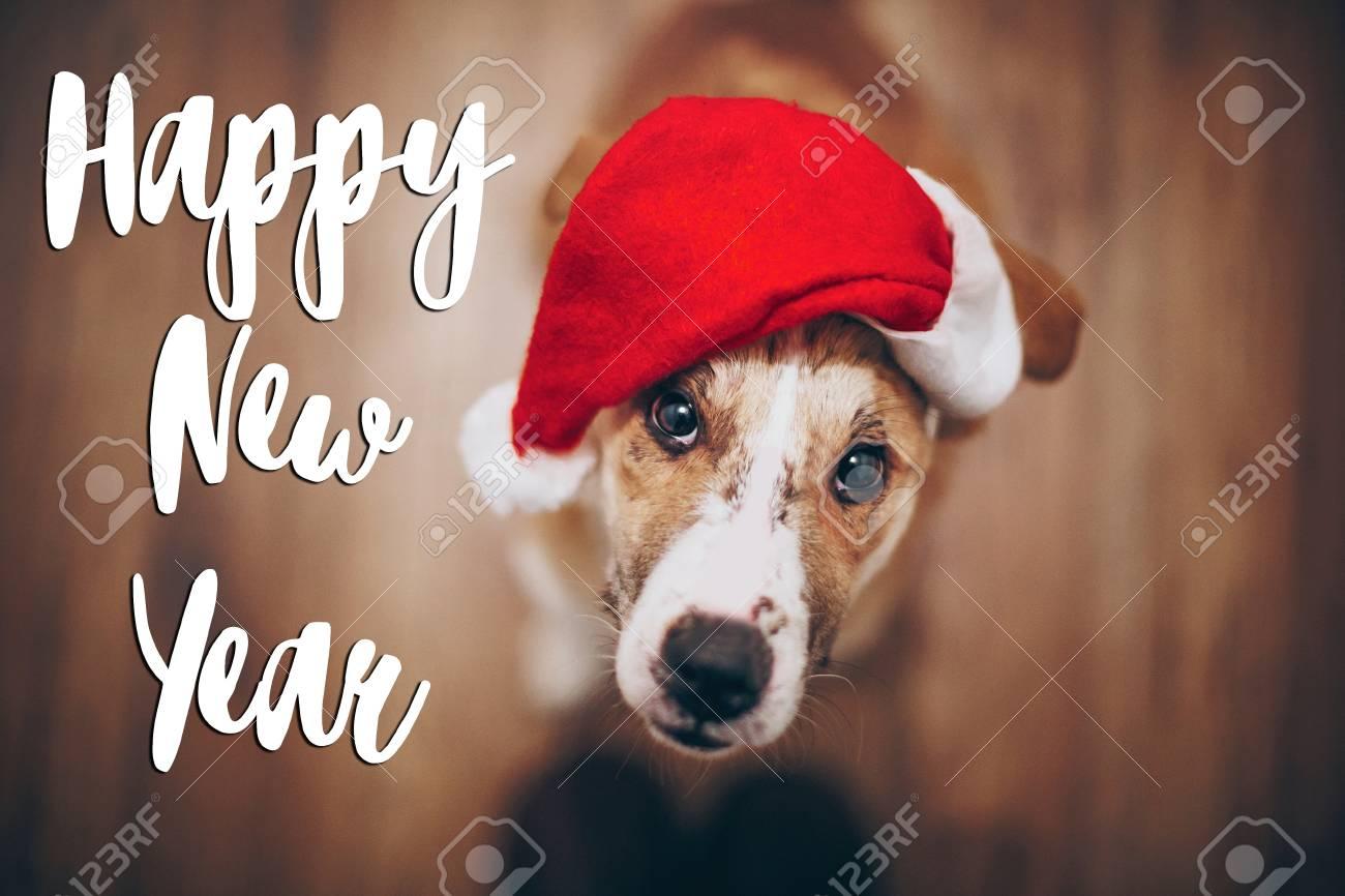 Happy New Year Text Seasonal Greetings Card Sign Dog In Santa