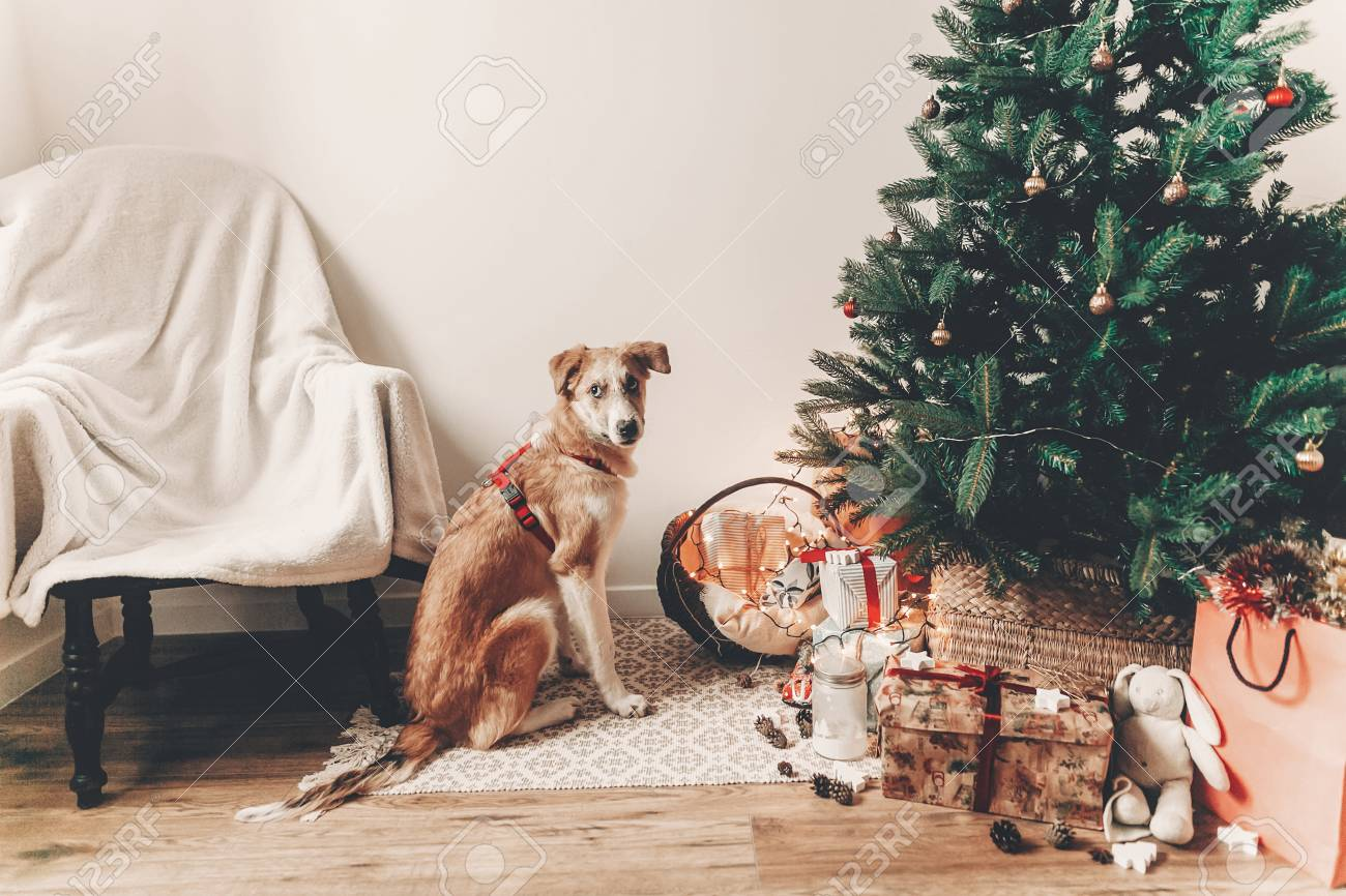 Christmas Kangaroo Lights.Merry Christmas And Happy New Year Concept Cute Brown Dog Sitting
