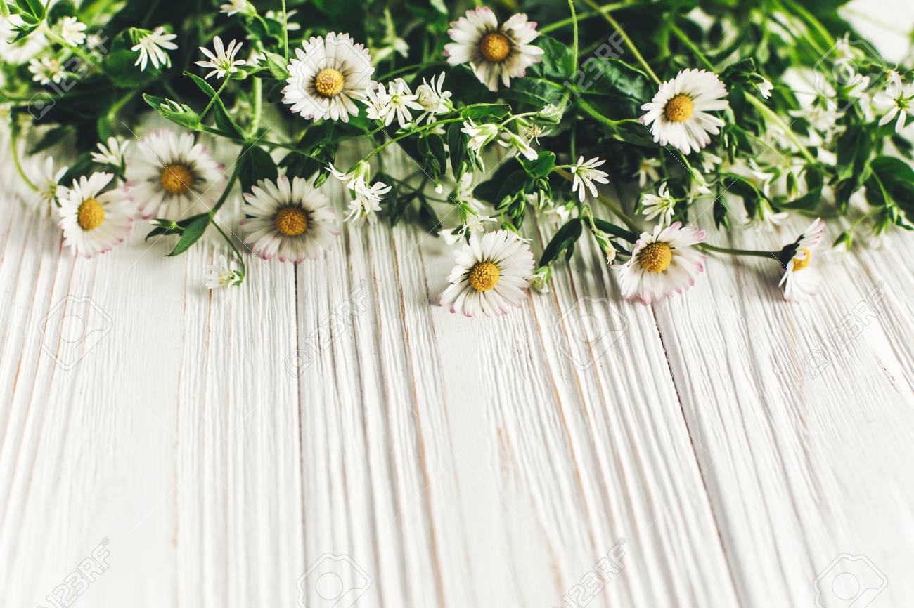 Hello spring image beautiful daisy flowers with greenery on rustic foto de archivo hello spring image beautiful daisy flowers with greenery on rustic white wooden background top view space for text greeting card earth izmirmasajfo Choice Image