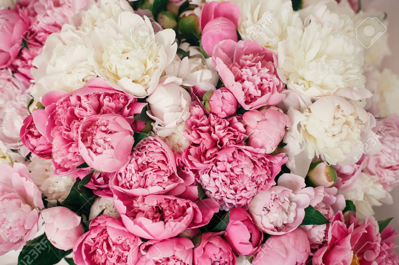 Peonies Wallpaper Pattern Big Stylish Pink And White Peony Bouquet Stock Photo Picture And Royalty Free Image Image 115885449