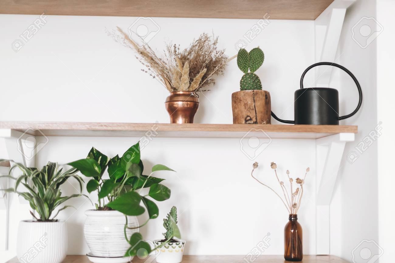 Stylish wooden shelves with green plants, black watering can, boho wildflowers. Modern hipster room decor. Cactus, epipremnum pothos, dracaena flower pots on shelf - 119641625