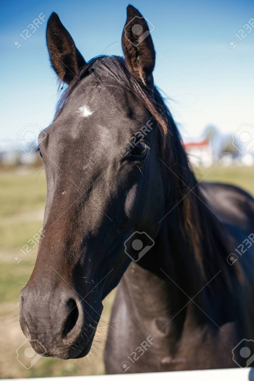 Cute Black Horse Standing Behind Fence On Background Of Hippodrome Stock Photo Picture And Royalty Free Image Image 137965764