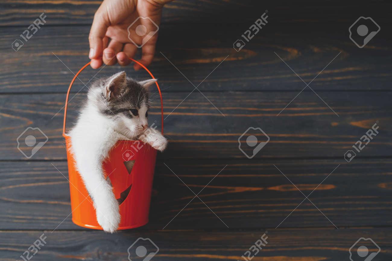 Cute kitty sitting in orange trick or treat bucket on black wooden background. Hand holding jack o' lantern halloween pumpkin pail with adorable kitten. Happy Halloween - 154359779
