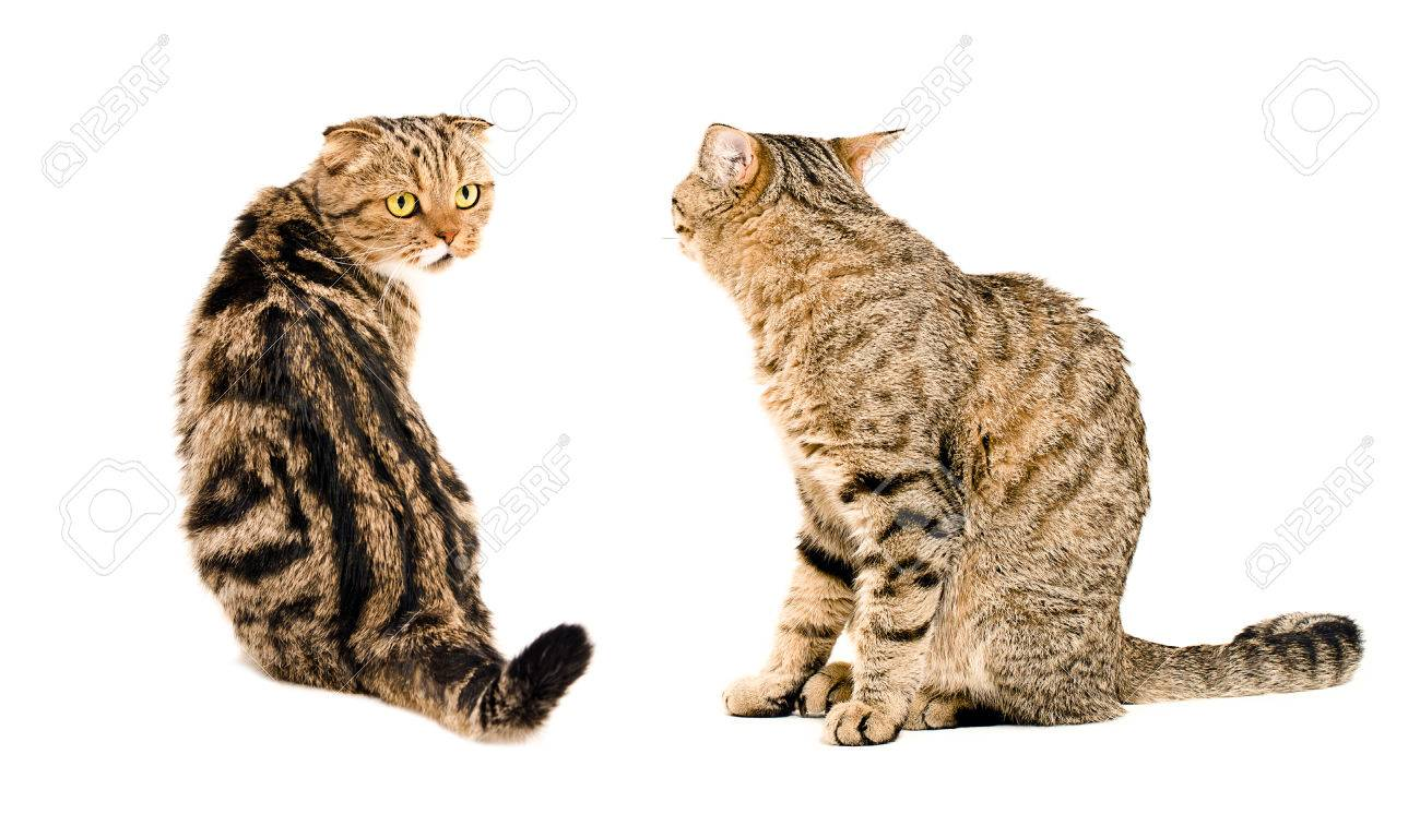 Two cats, looking at each other, sitting together isolated on..