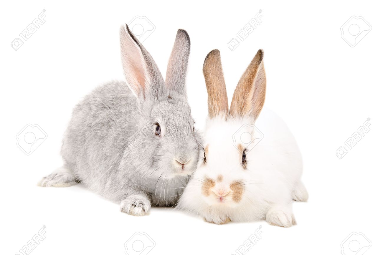 rabbit stock photos u0026 pictures royalty free rabbit images and