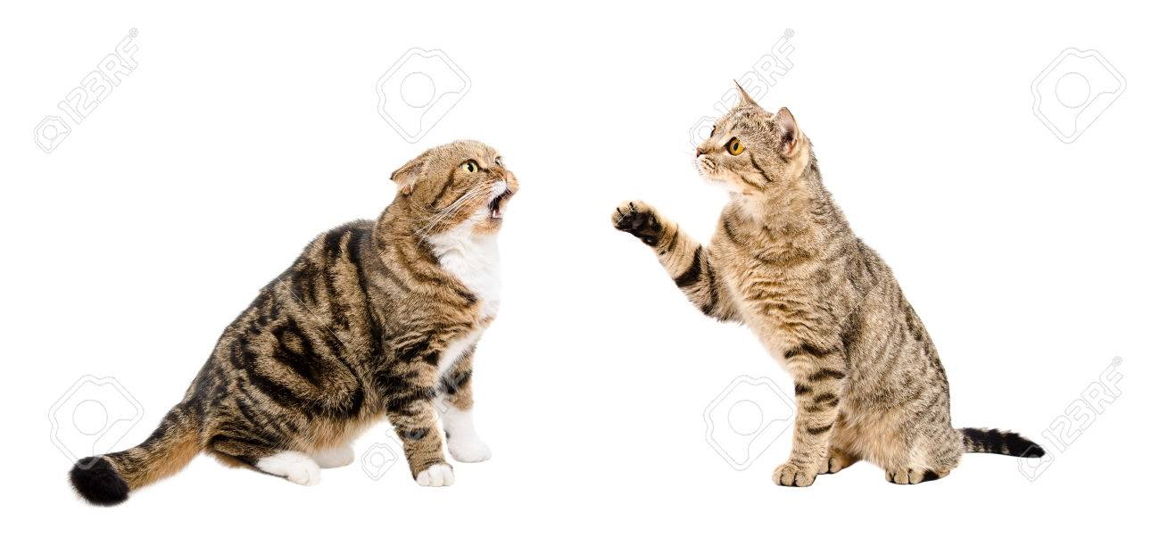 Two funny cats sitting together isolated on white background