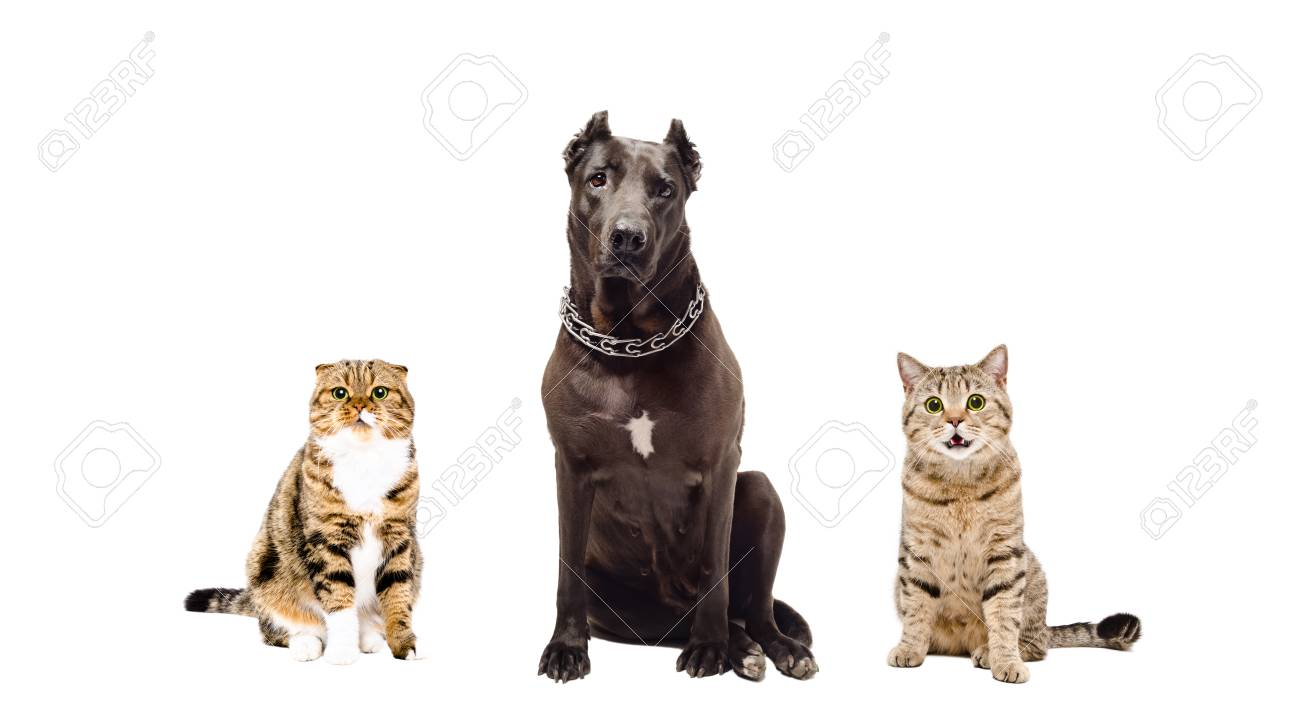 Dog and two cats sitting together isolated on white background