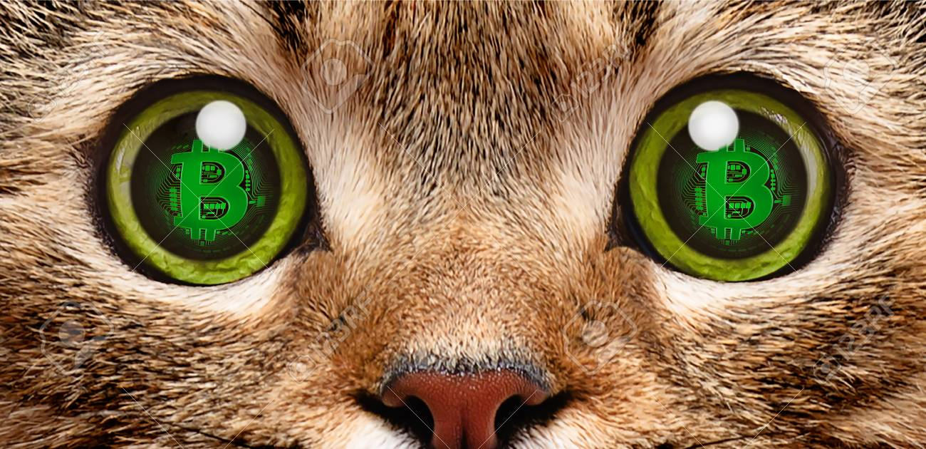 101191480-portrait-of-a-cat-in-the-eyes-