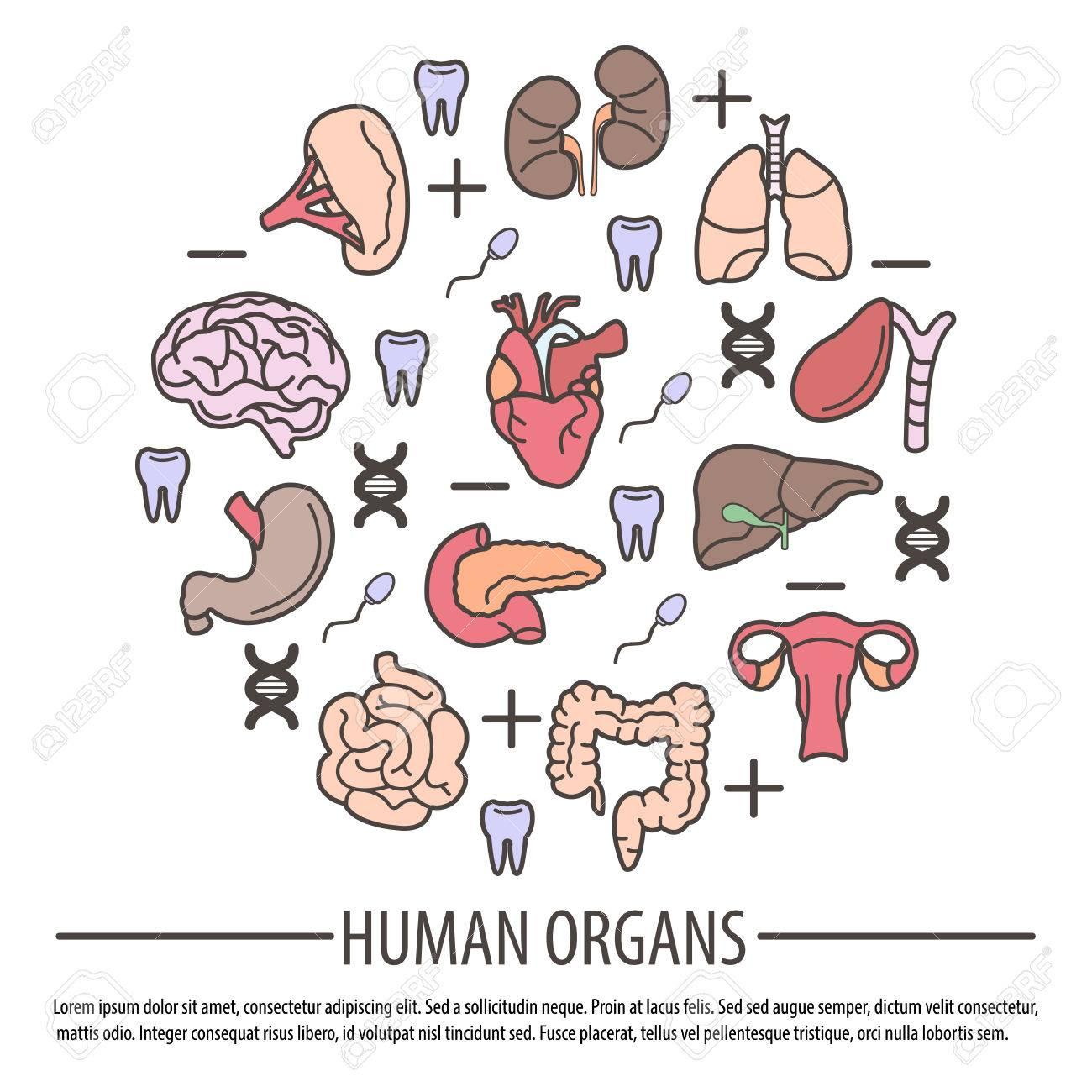 DNA の部分、Rh 因子と歯と臓器のイラスト素材・ベクタ - Image 71454621.