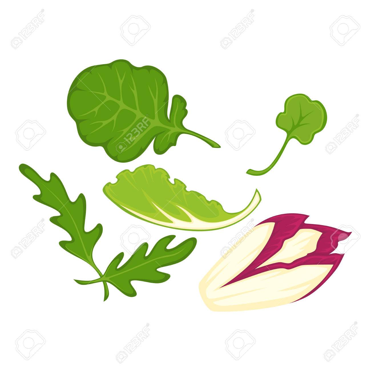 Feuilles De Salade Biologique Saine Ensemble D Illusions Isolé Dessin Animé