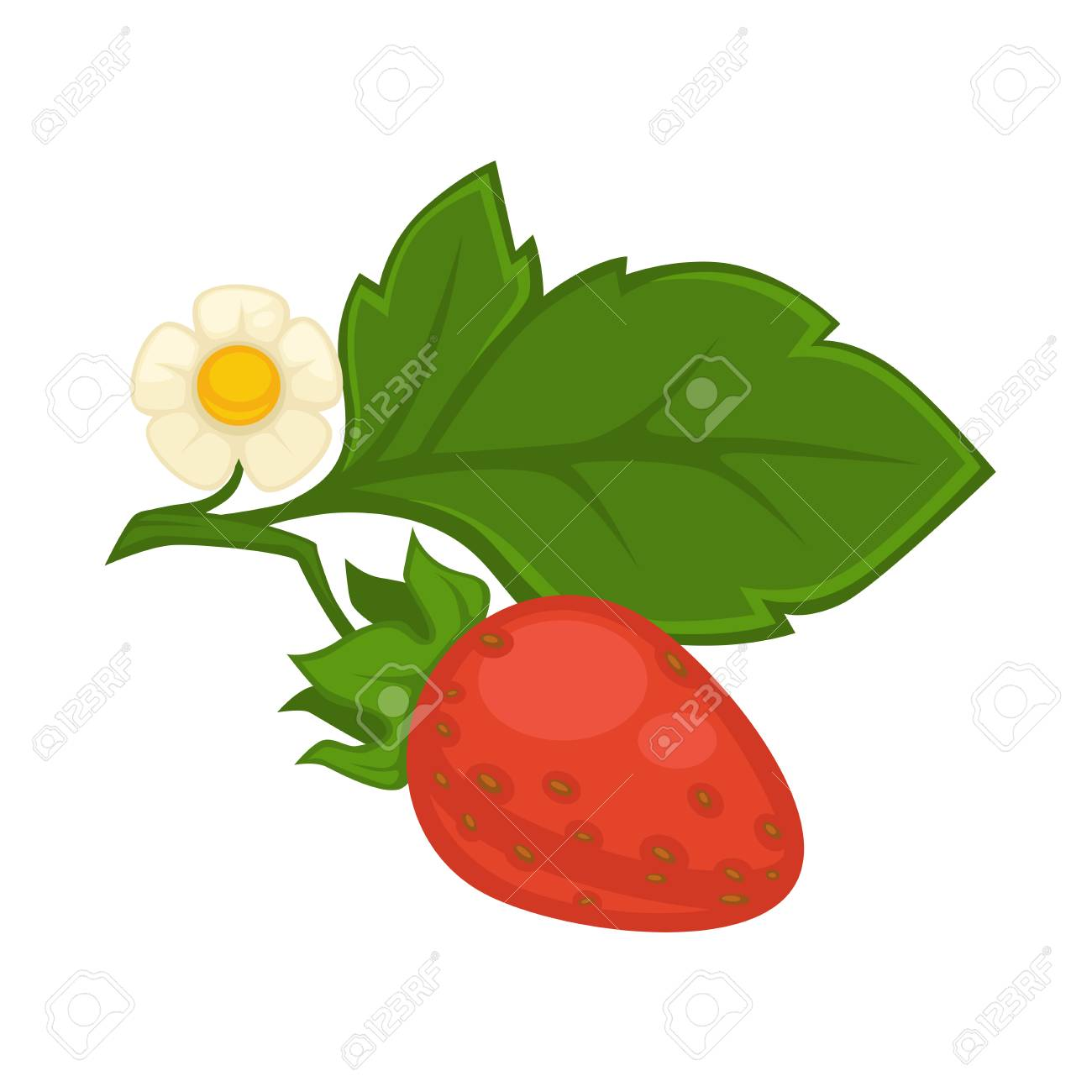 Red Strawberry With Green Leaf And Flower Isolated On White Royalty