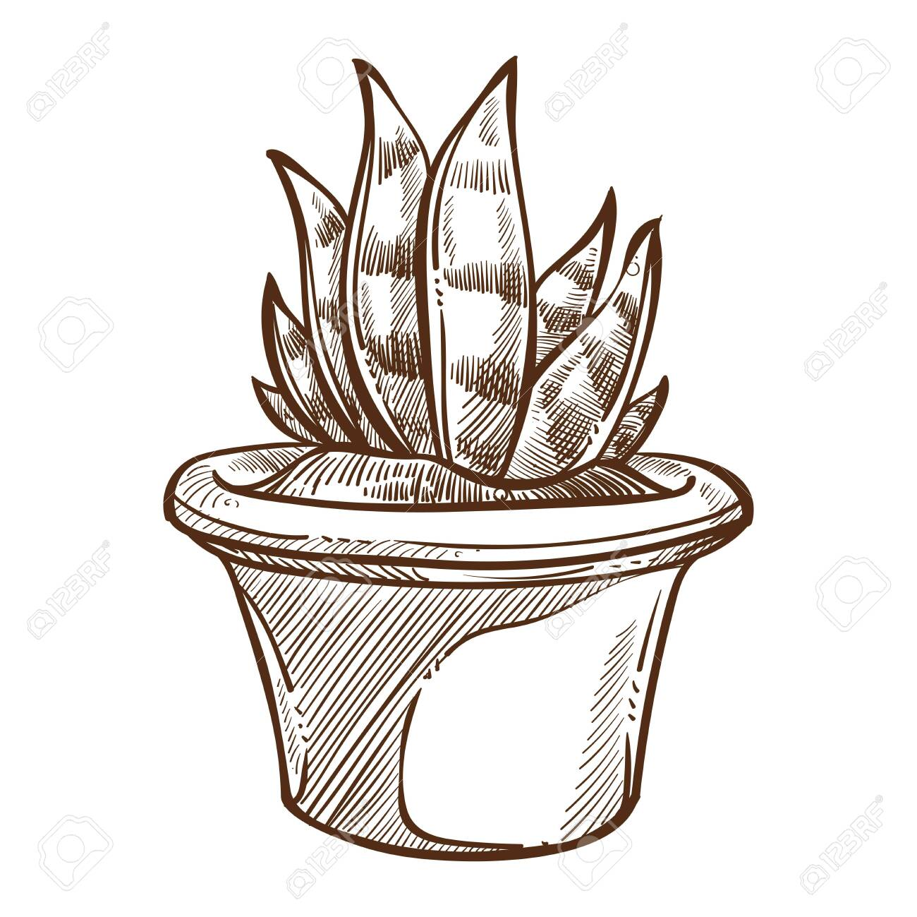Indoor Plant Aloe In Pot Isolated Sketch Home Decor Vector Houseplant Royalty Free Cliparts Vectors And Stock Illustration Image 124518489
