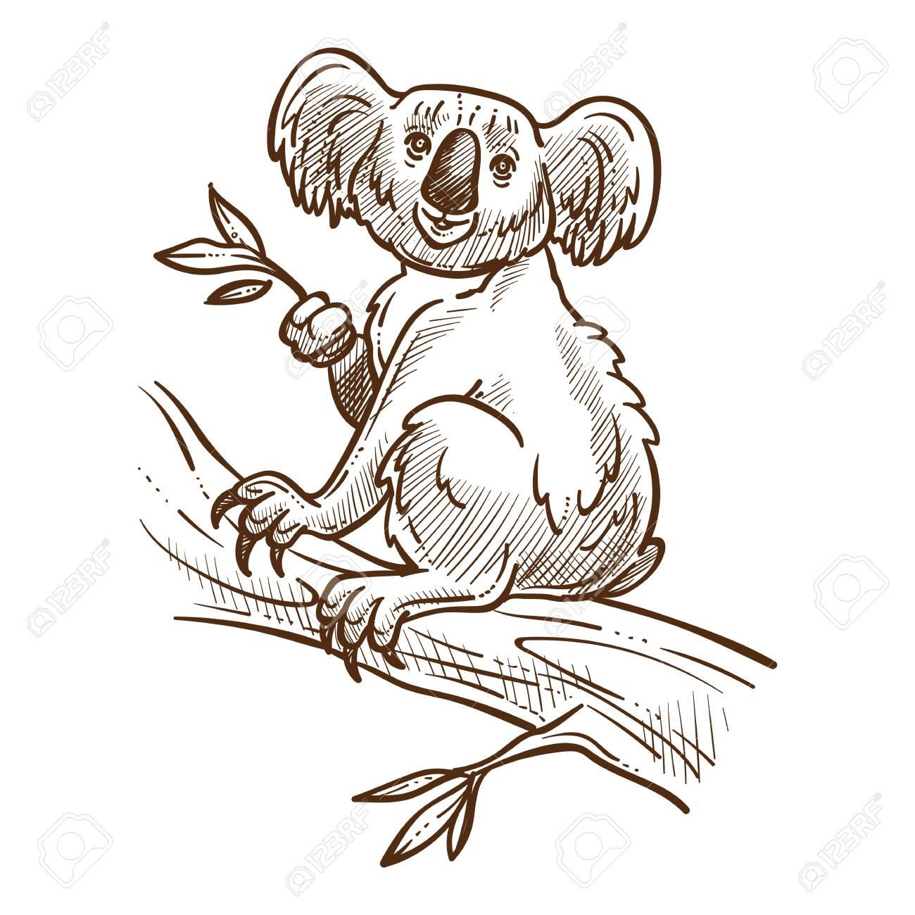 Australian symbol, koala bear on tree branch eating eucalyptus - 131924867