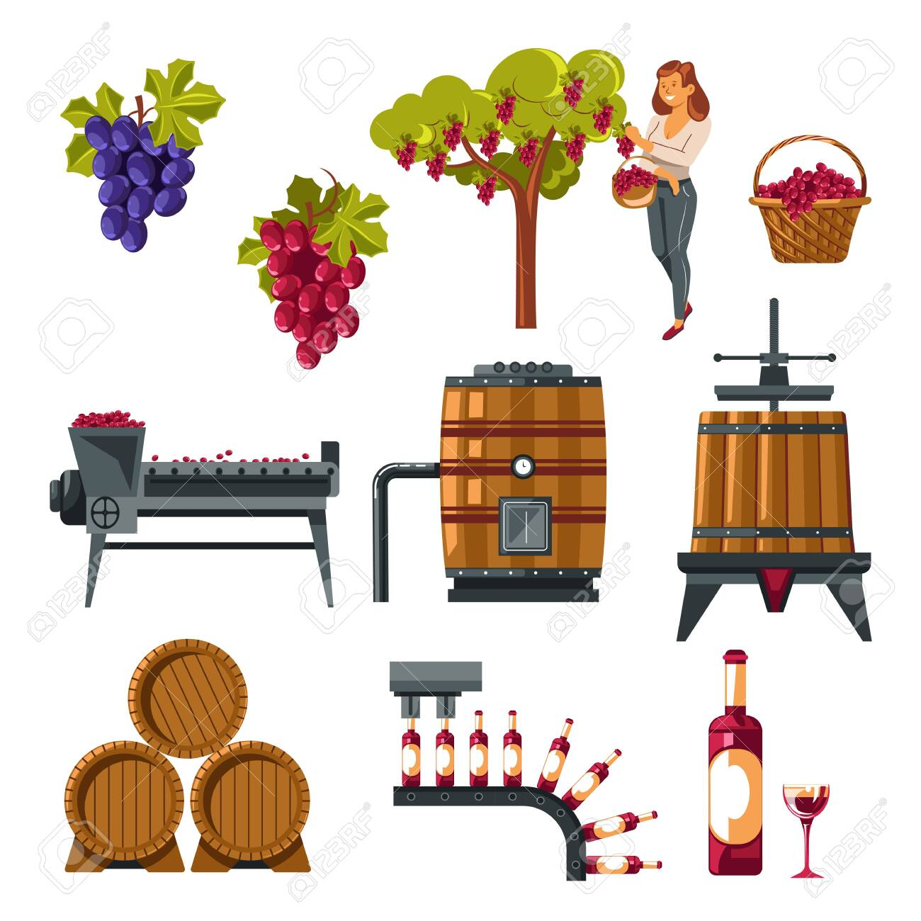 Winemaking process illustrated from grapes growing till wine bottling - 133435677