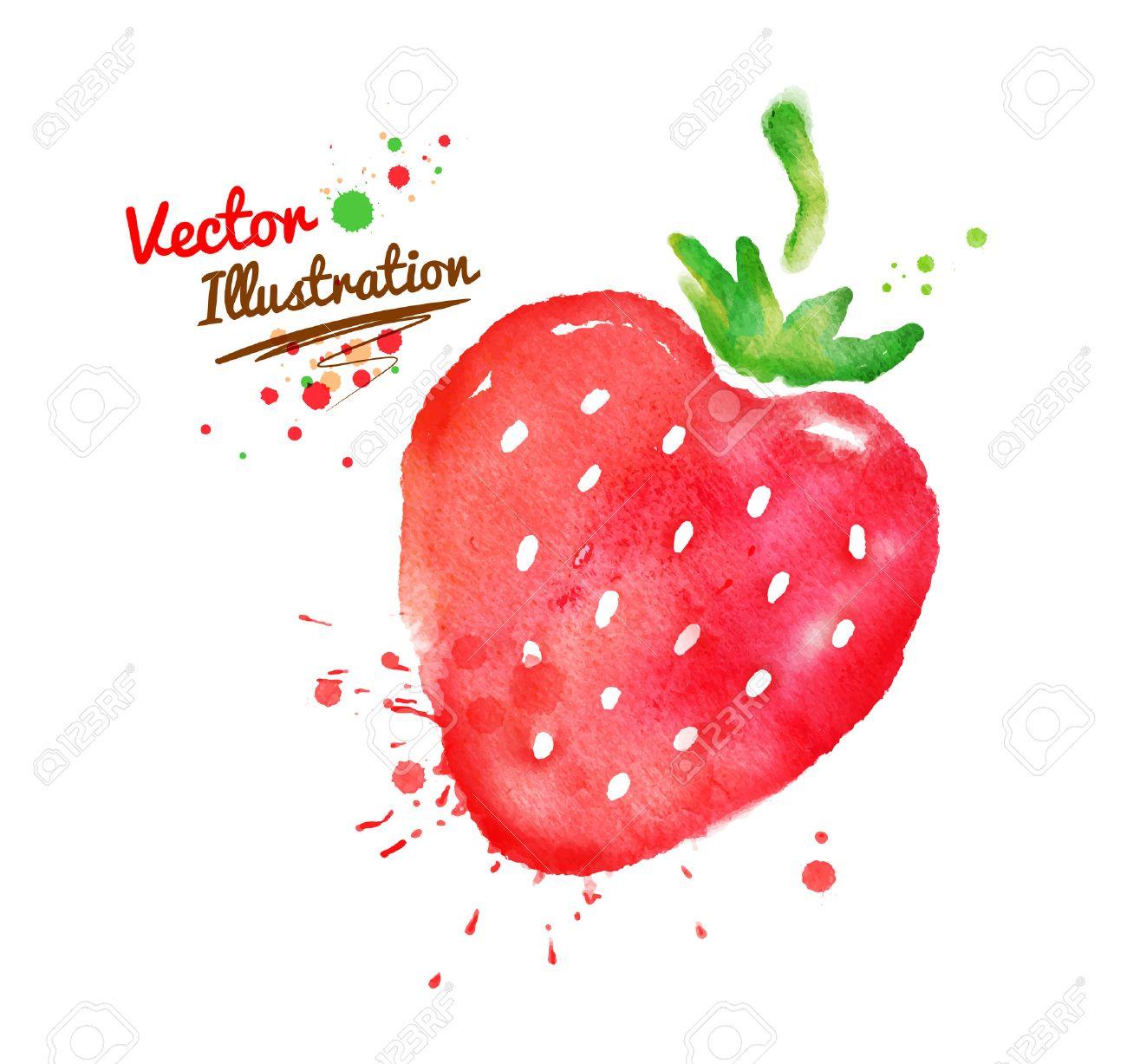 Vector watercolor hand drawn strawberry. - 39809590