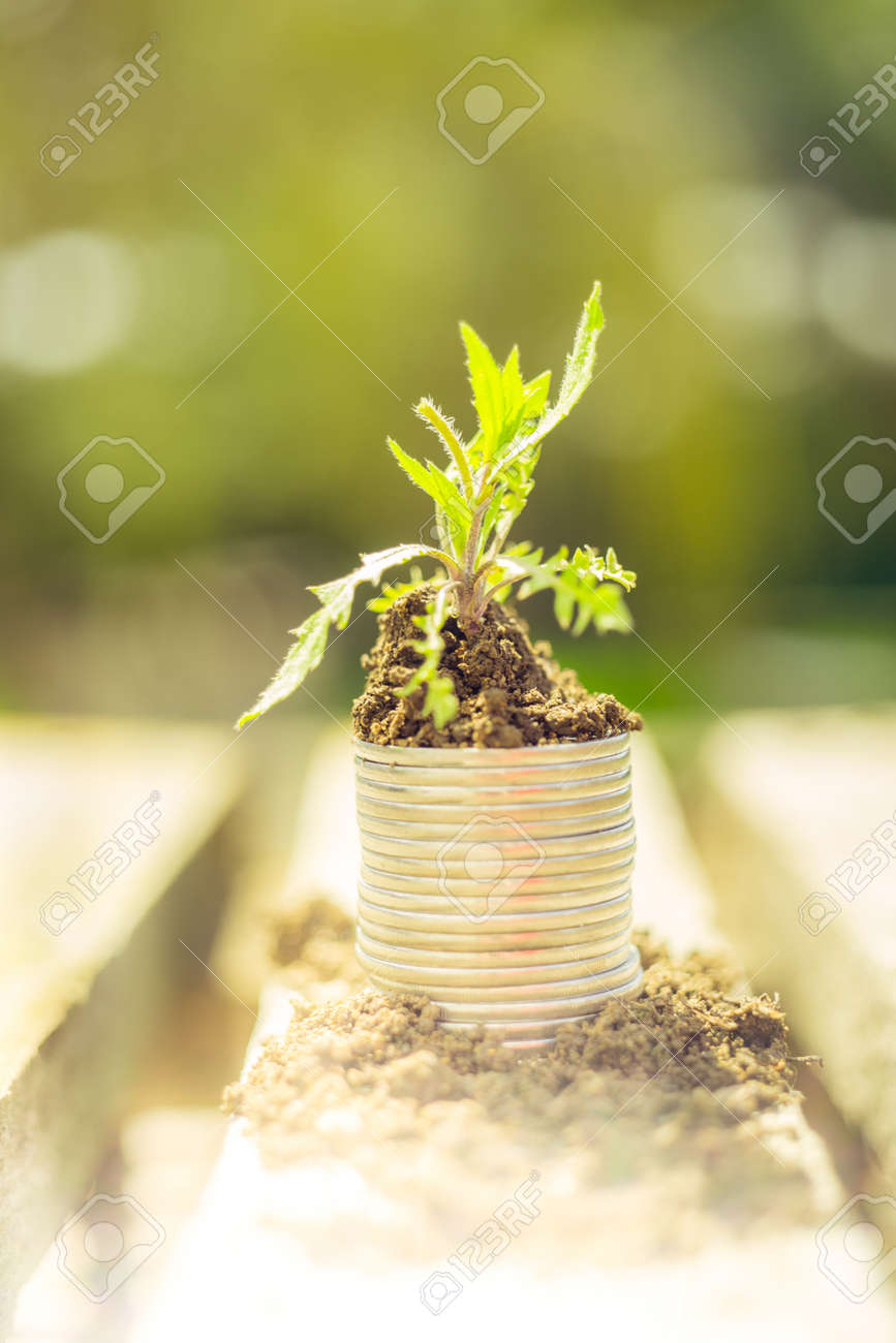 Green plant growth from soil on coins in the garden. - 169043848