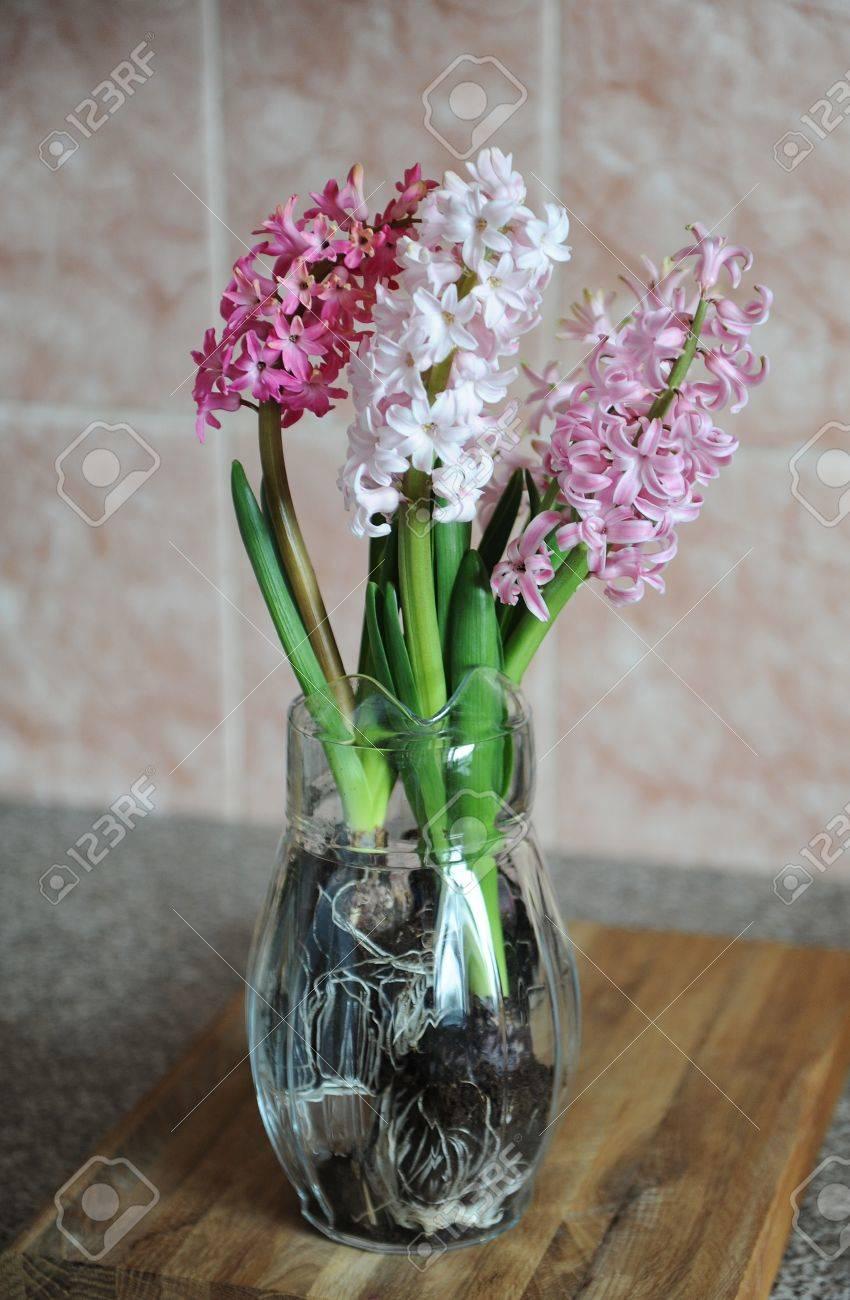 Tender pink flowers of hyacinth bulbs in a glass jar vase nice tender pink flowers of hyacinth bulbs in a glass jar vase nice pink background reviewsmspy