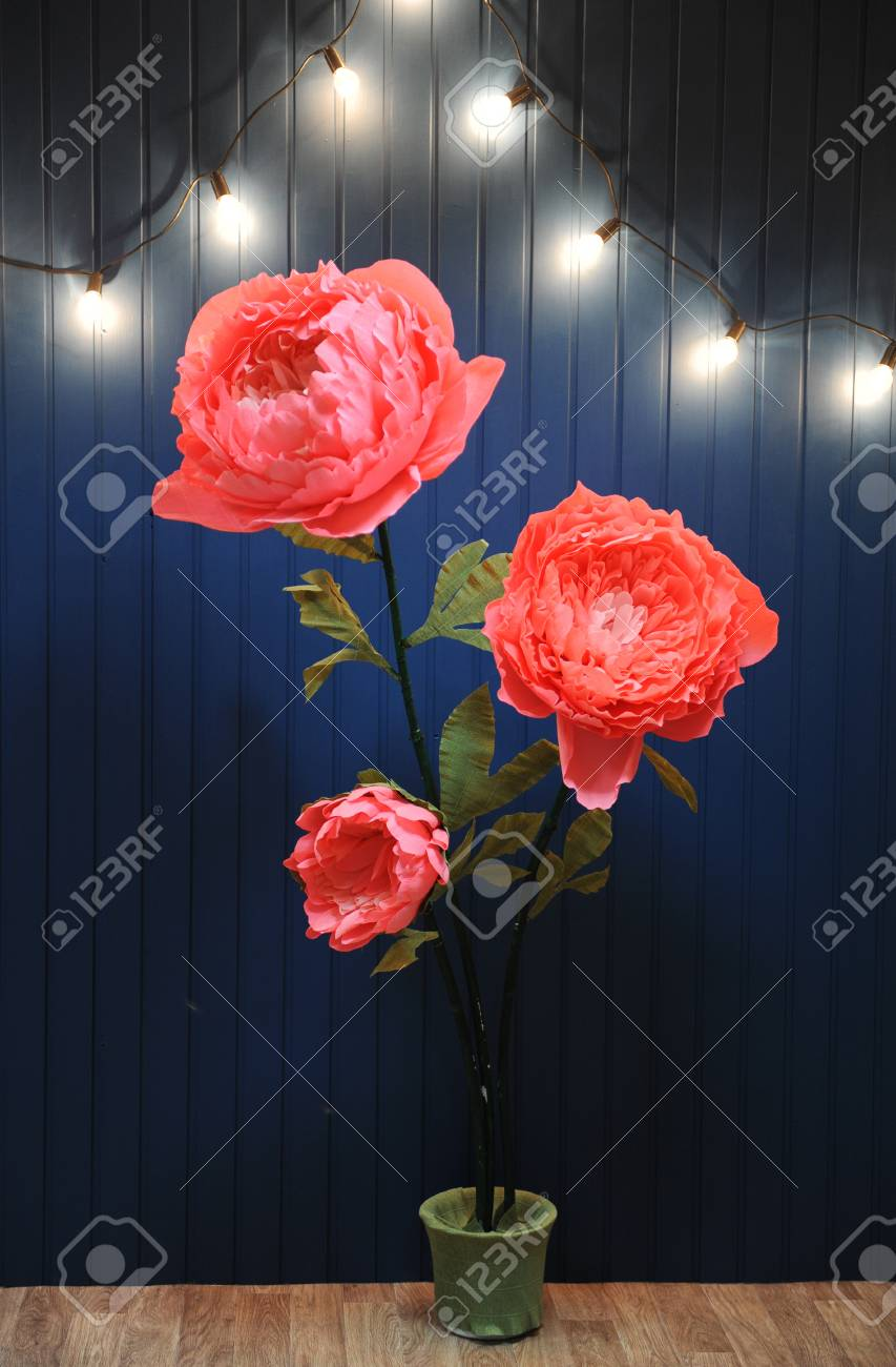 Huge Growth Pink Flowers In The Interior On The Background Of