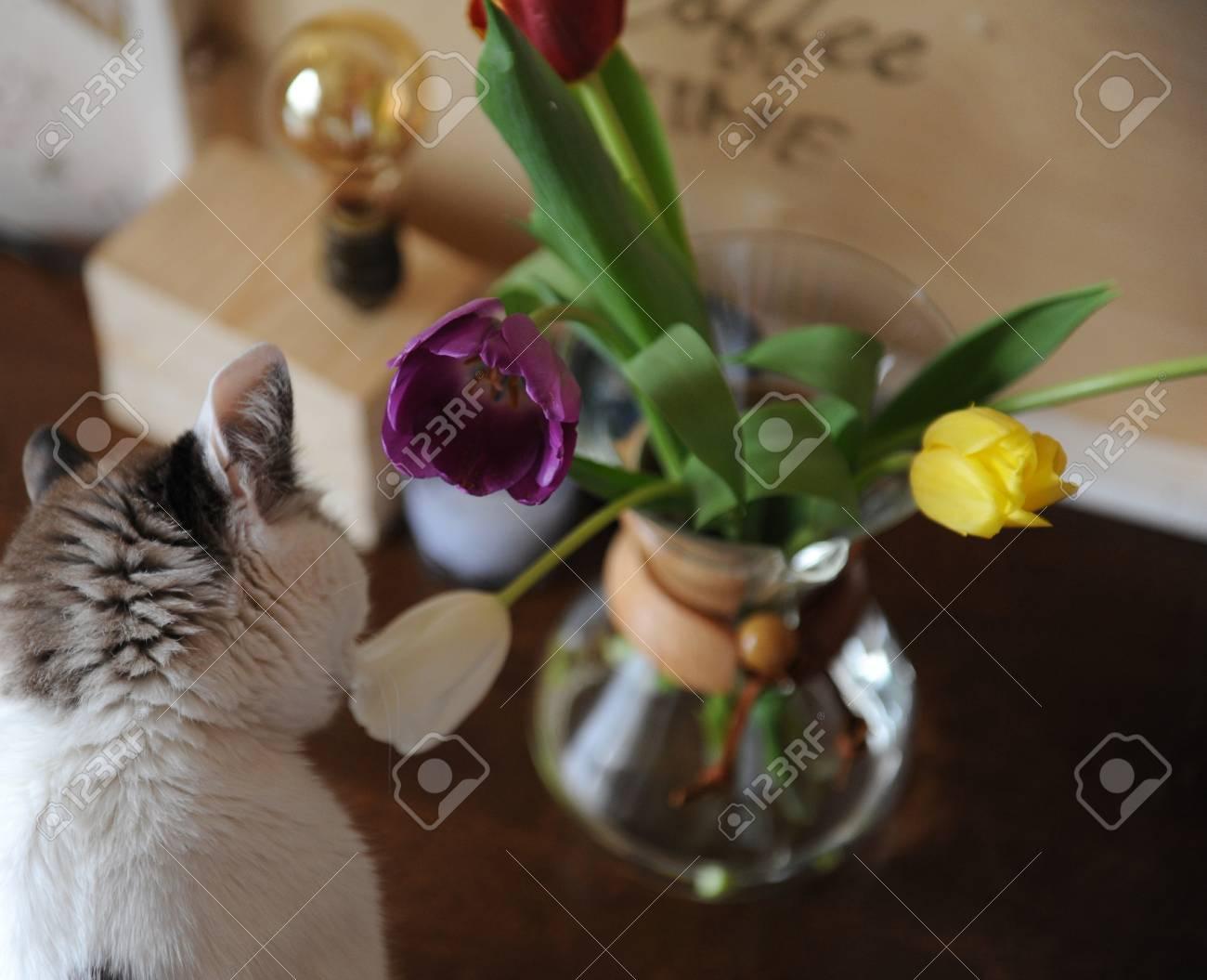Lampada Fiore Tulipano : Fiorisce i tulipani in un contenitore di vetro per la preparazione