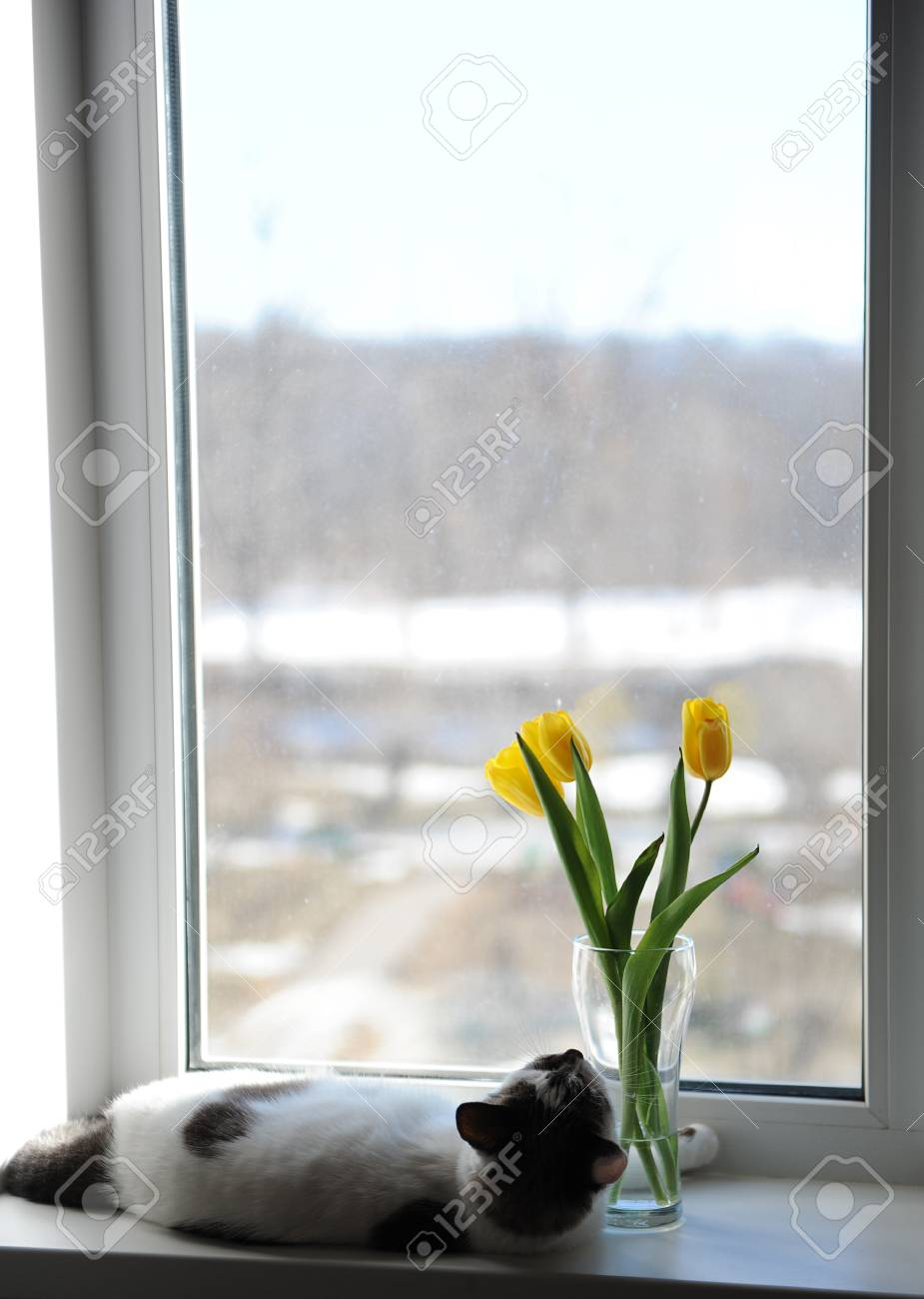 White Fluffy Cat And Bouquet Of Flowers Yellow Tulips In A Glass