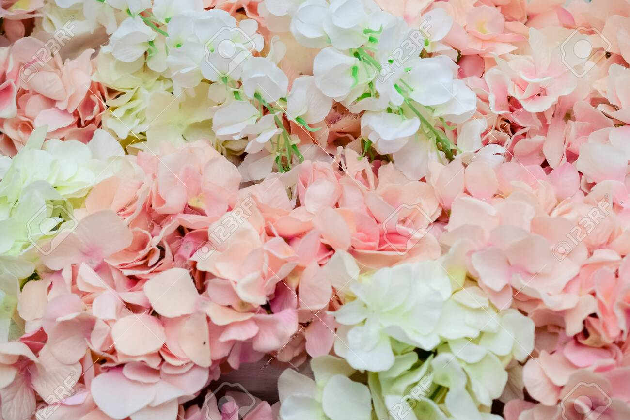 wall of large white and pink flowers-peonies - 133471303