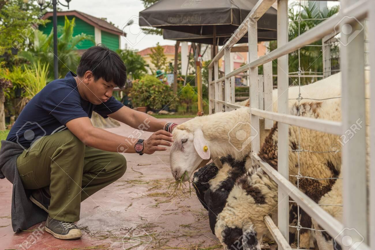 Teens are feeding sheep - 119738828