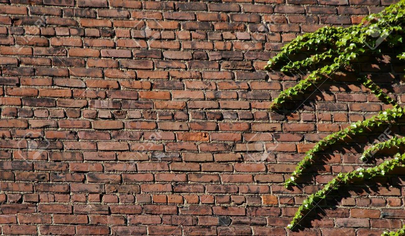 Brick wall in sunlight with ivy growing on right side, unique background image Stock Photo - 1696773