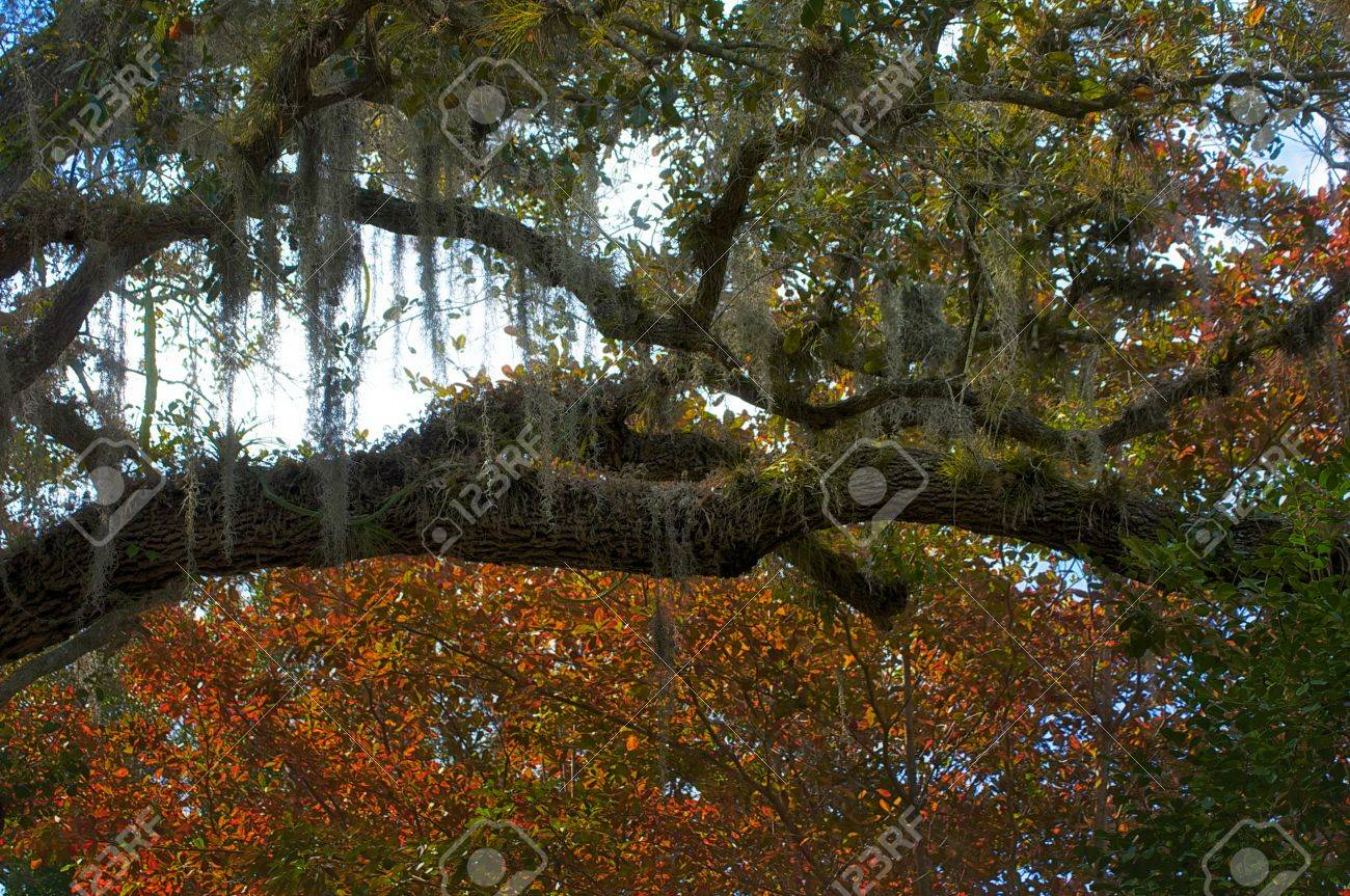 sphagnum moss growing on trees in tropical forest Stock Photo - 12935020